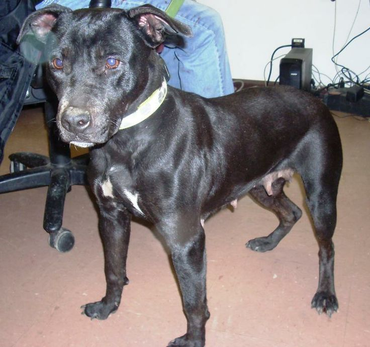 KENTON, OH. Contact us for more information.  Hardin County Dog Shelter. 419-674-2209..
