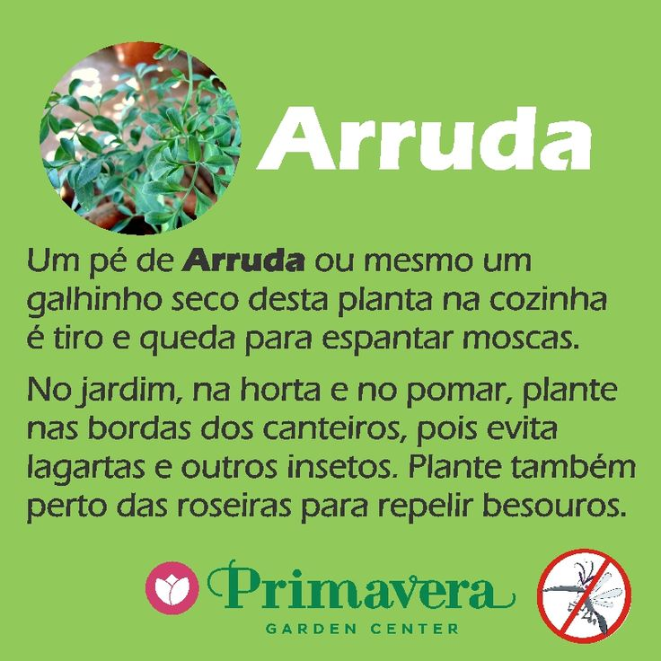 primavera-garden-arruda