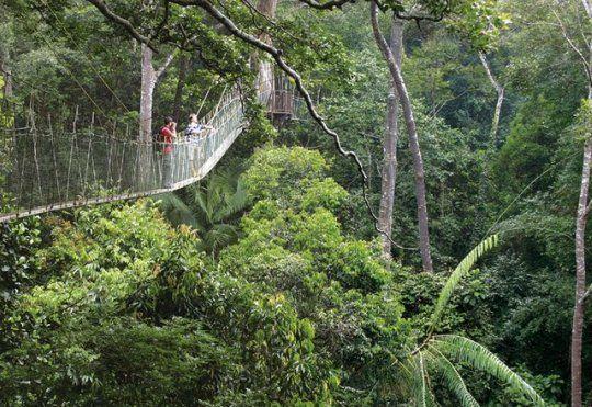 Pahang :: Canopy Walk in Taman Negara, Pahang
