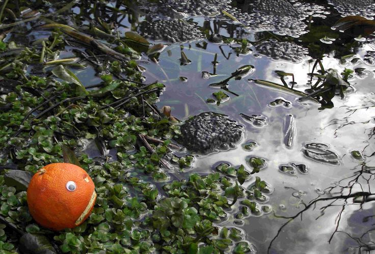 "Mr Angry Orange went to commune with nature to calm his feverish thoughts- until he got out: ""disgusting"" he shuddered, and hurried back in again."