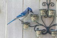 Repurpose old tea candle holders into pretty bird feeders.