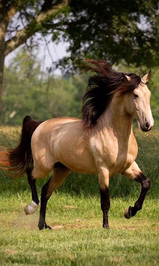 A Beautiful Buckskin.                                                                                                                                                      More
