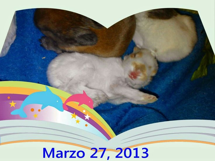 My pets pics  .  March 27, 2013