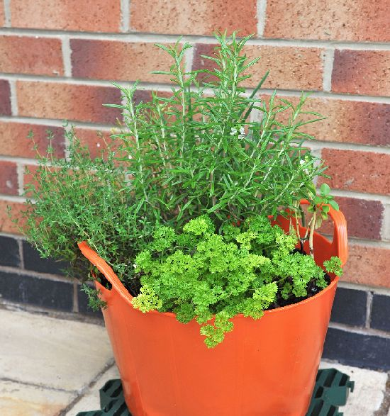 Herbs are fantastic to grow in Rainbow Trugs.....they are easy to access if you leave them by your kitchen door www.rainbowtrugs.com