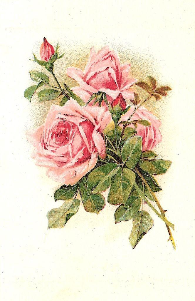 этом таится старинные открытки розы условиями