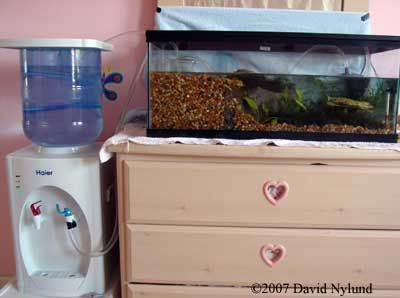 53 best images about axolotl problems on pinterest water for Fish tank water cooler