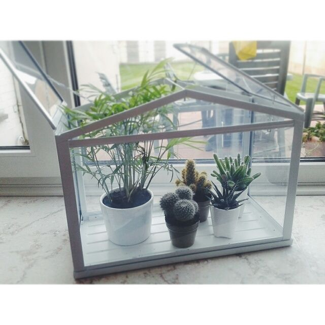 Mini garden inside! - Ikea