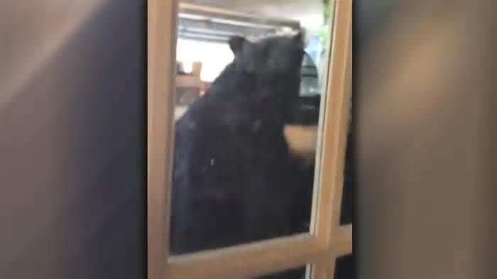 Florida man scares black bear out of his garage A Florida man was in for quite a surprise Monday when he looked into his garage and spotted a large black bear going through his stuff. Brad Tamm told FOX 35 Orlando he was on a conference call when he spotted the bear through a thin glass door of his ...