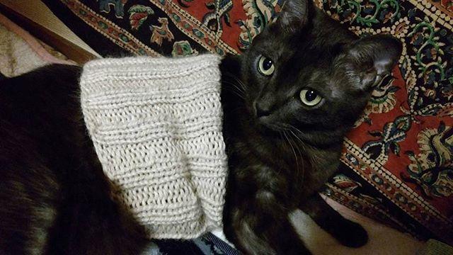 ゾロ君 「 寒くなると腹巻きは必需品にゃ!」 ✩ #オッサンぽいぞ #ちゃぶ台ひっくり返しそう #ネコダスケステーション  #黒猫 #腹巻きは好き #ゾロ君 #保護猫 #巨体 #愛猫 #ねこ部 #にゃんすたぐらむ  #みんねこ  #catstagram #cats #catlove #cat