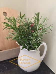 GROWING A ROSEMARY TOPIARY IN TIME FOR CHRISTMAS…..