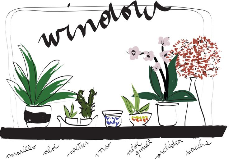 #illustration #MLC #my window #plants #flowers http://letiziamlc.tumblr.com/