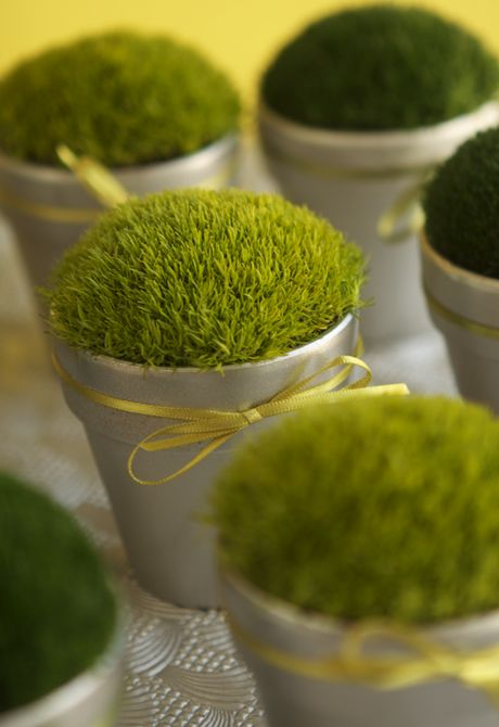 Sweet wedding favor—tutorial  http://www.projectwedding.com/wedding-ideas/diy-little-pots-of-moss