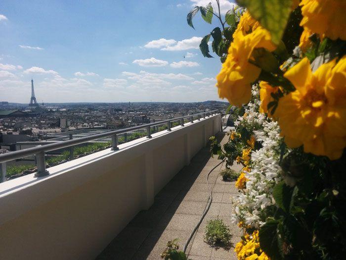 """Paris sous les fraises, un projet de """"végétalisation innovante"""" sur la terrasse des Galeries Lafayette Haussmann"""