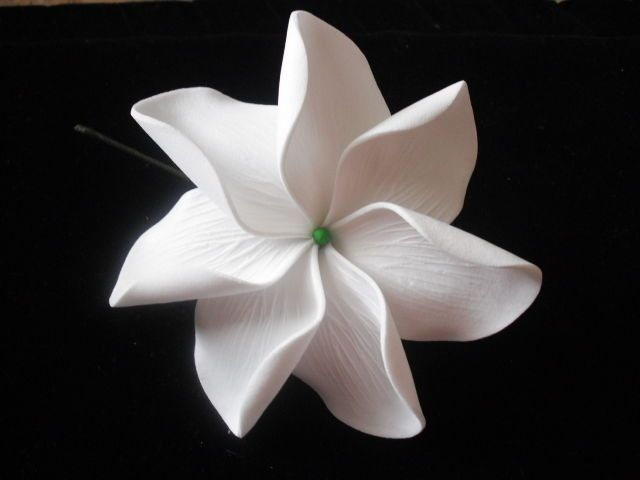 """4"""" TAHITIAN GARDENIA TIARE. The Tahitians are really attached to the Tiare, and it is always worn in behind the ear or attached with many flowers into floral crowns. FLOWER HAIR. The tradition shows that if a flower is worn behind the left the ear, that means thather love is taken. 