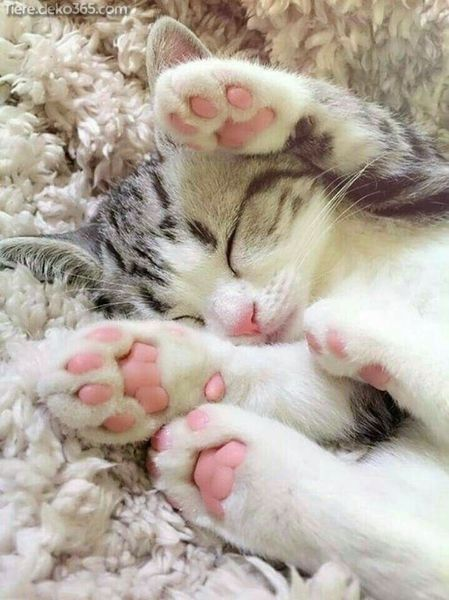 Schöne Tipps, mit denen sich die Nägel Ihrer Katze leichtgewichtig schneiden lassen – Katze