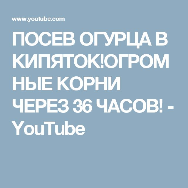 ПОСЕВ ОГУРЦА В КИПЯТОК!ОГРОМНЫЕ КОРНИ ЧЕРЕЗ 36 ЧАСОВ! - YouTube