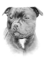Tonal drawing of stafie dog