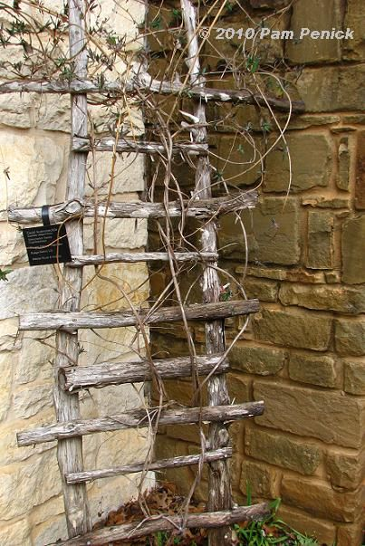 Trellis made of sticks