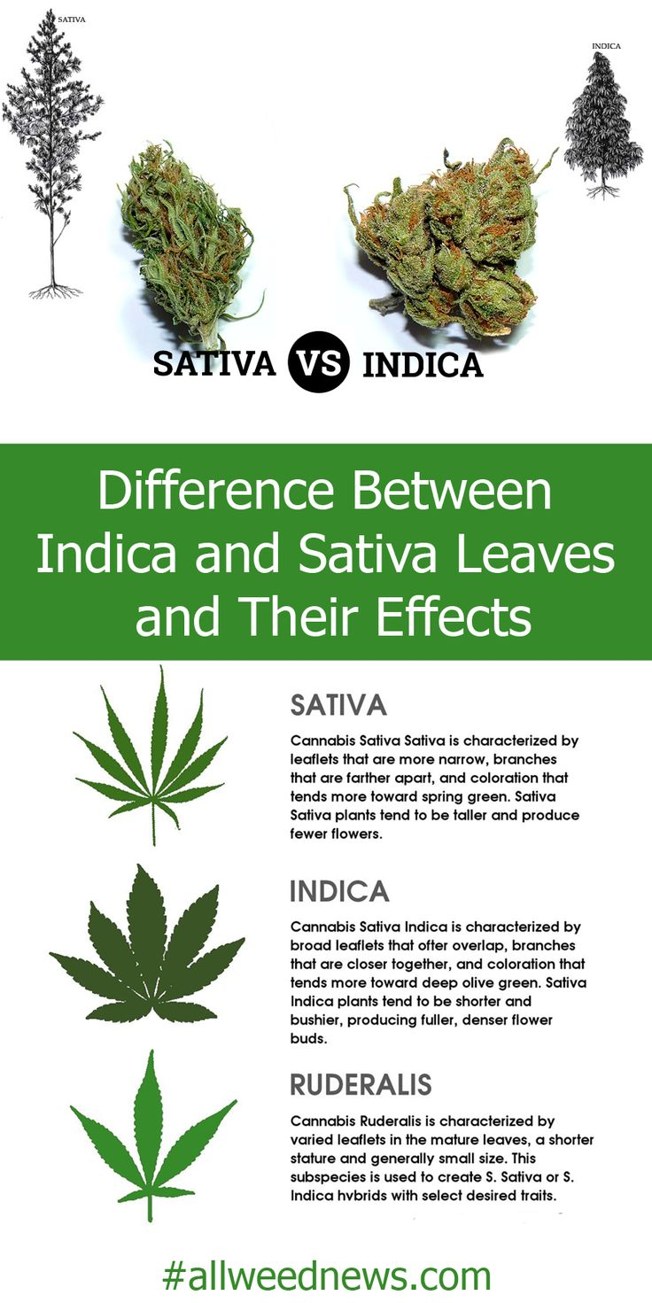 difference between male and female cannabis seeds dog