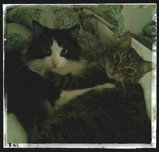Jacobi&Ti-Tom