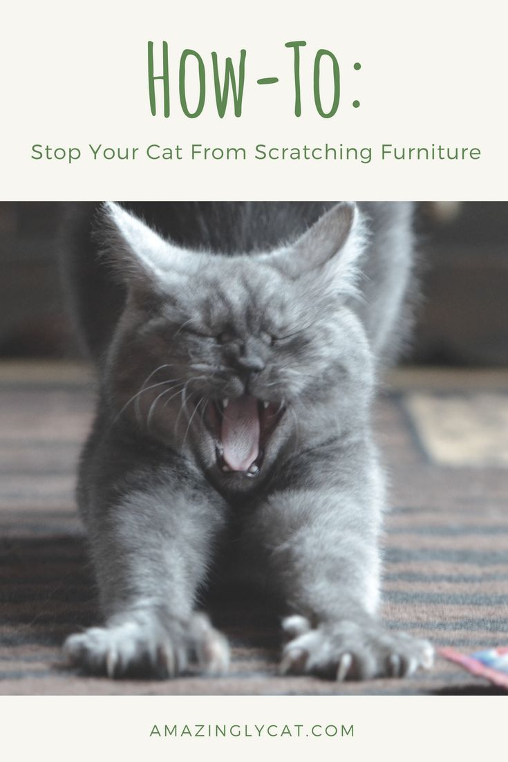 How To Stop Your Cats From Scratching Furniture Cat Training Cat Training Scratching Cat Behavior