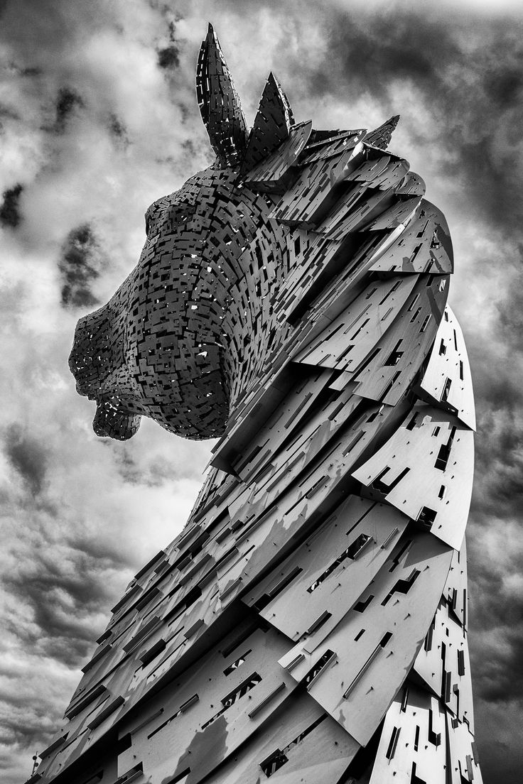 """Fill the Frame in Photography. Author: Lucas Martling. Photo: """"The Kelpie"""" captured by Martin Grier. http://www.picturecorrect.com/tips/fill-the-frame-in-photography/"""