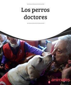 """Los #perros doctores  Aunque no #cuenten con un título #universitario que los acredite, bien podríamos decir que hay """"perros doctores"""" que nos ayudan y mucho a curarnos dolencias del #cuerpo y del alma."""