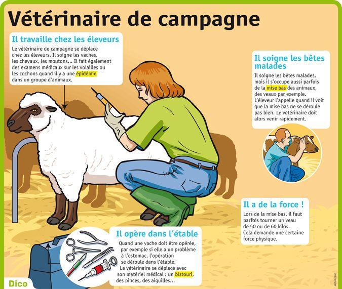 Fiche exposés : Vétérinaire de campagne