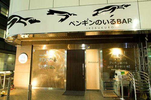 東京都池袋に、本物のペンギンが歩きまわる「ペンギンのいるBAR」オープン! | ライフ | マイナビニュース