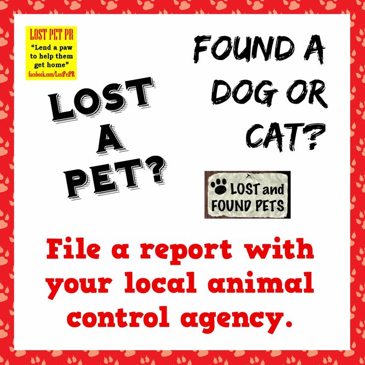 24 best If you find a lost dog images on Pinterest Animal rescue - lost pet poster template