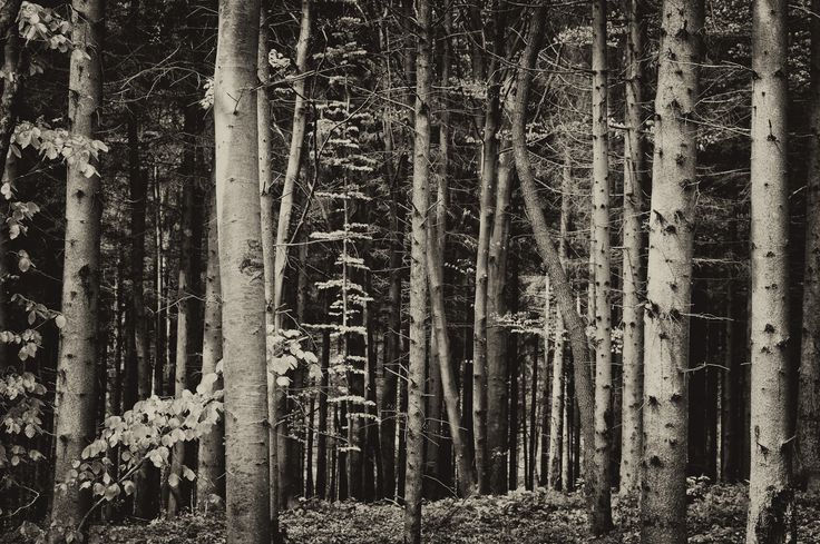 Forest near Csesznek