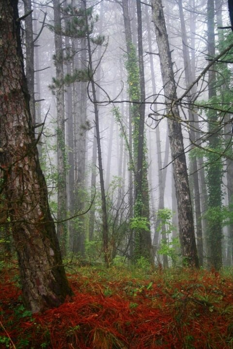 Red, misty, autumn. #autumn