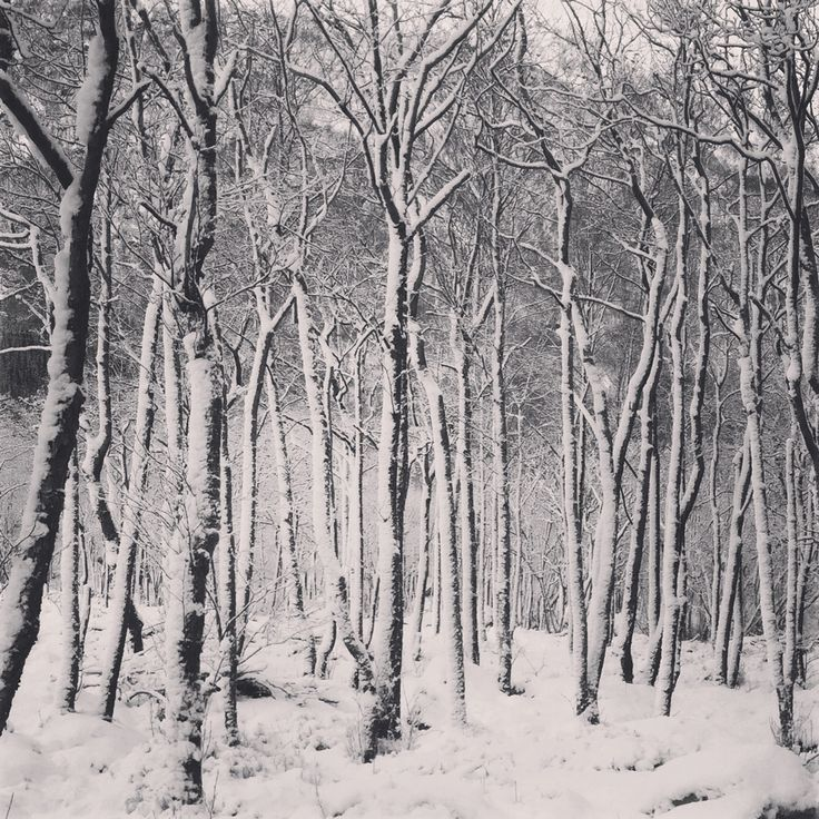 Prosjekt 365 / 4 #361 #onephotoaday #forest #winter #winterwonderland #photography #nature #kvinnherad  photo @jorunlarsen