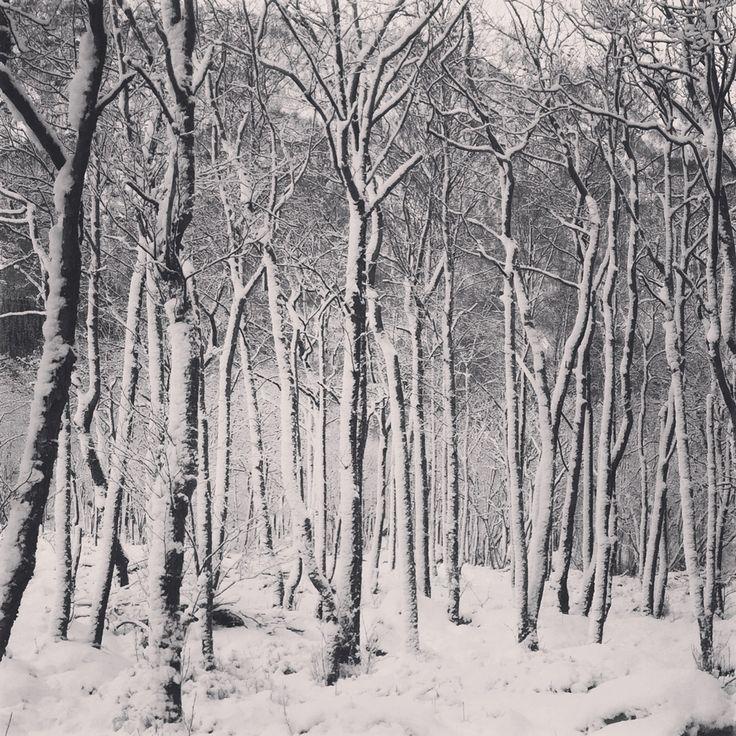Prosjekt 365 / 4 #361 #onephotoaday #forest #winter #winterwonderland #photography #nature #kvinnherad  photo @jorunlarsen