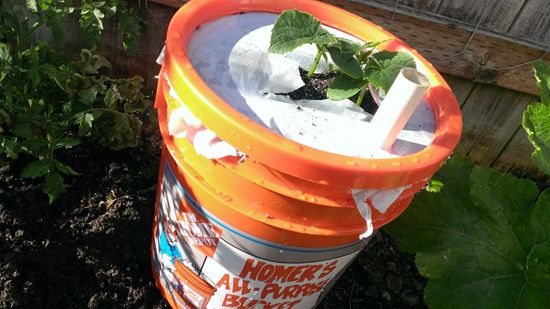 Easy and cheap way to make a self watering planter with an - Self watering 5 gallon bucket garden ...