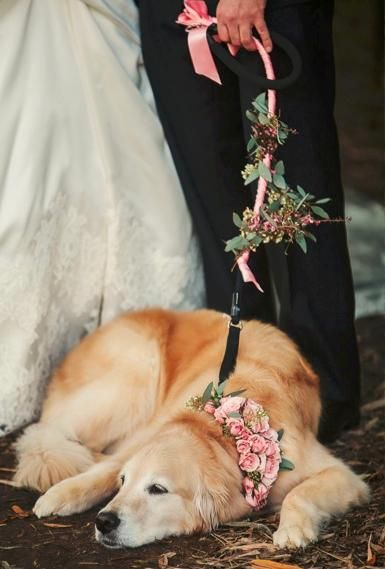 A golden retriever adorned in roses, dogs in weddings (Photo by Nadia D. Photography)