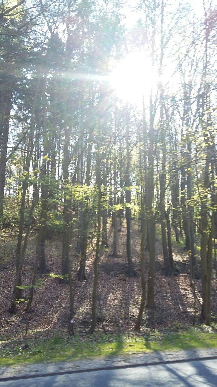 Las przeswietlony słońcem