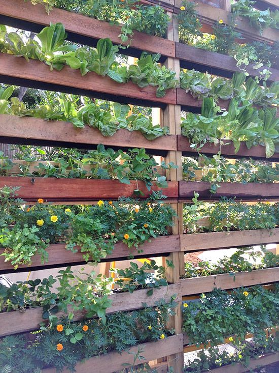 privacy screens & vertical garden in one!!