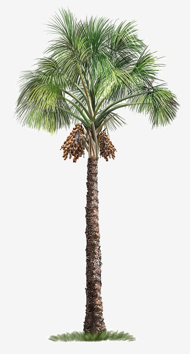Milhoes De Imagens Png Fundos E Vetores Para Download Gratuito Pngtree Tree Photoshop Palm Tree Drawing Palm Tree Png