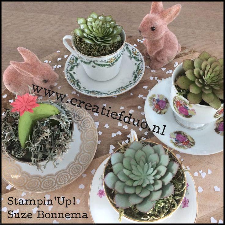 succulents vetplantjes stampin up suze bonnema