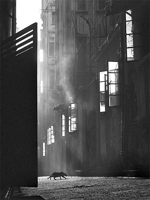 Fan Ho - Inspiration from Masters of Photography