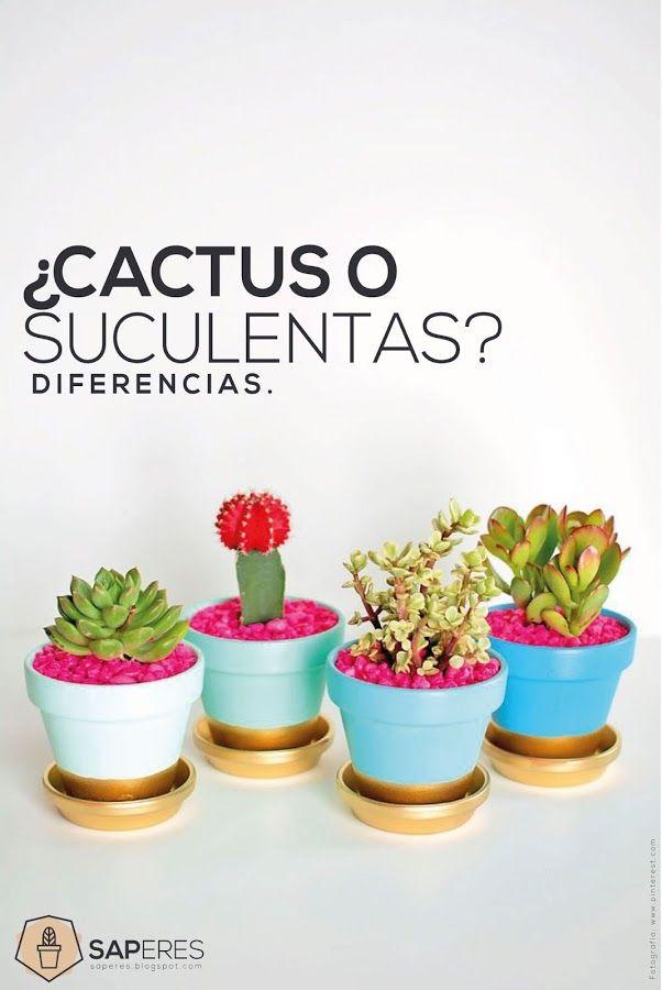 ¿cactus o suculentas? -Diferencias   Plantas