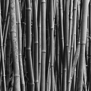 Non-Invasive Bamboo | Rodale's Organic Life