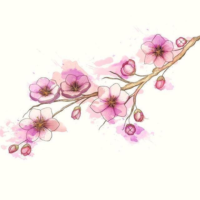 """Вот ты листаешь ленту: """"ок, цветочки, идём дальше"""", но это не просто цветочки, а эскиз татуировки для одного хорошего человека.  И ещё они мне дороги потому что это приблизительно двенадцатый вариант исполнения🤦    Если полистать, можно разглядеть детали подробнее   #tattoo #sketch #digitalart #instaart #illustration #flowers #cherryblossom"""