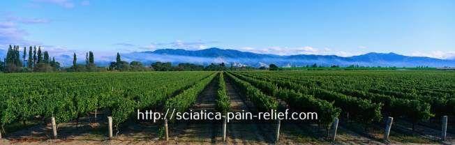 douleur coude - soulager une hernie discale.maladie sciatique 9245873629