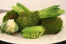 Hyacint in moss