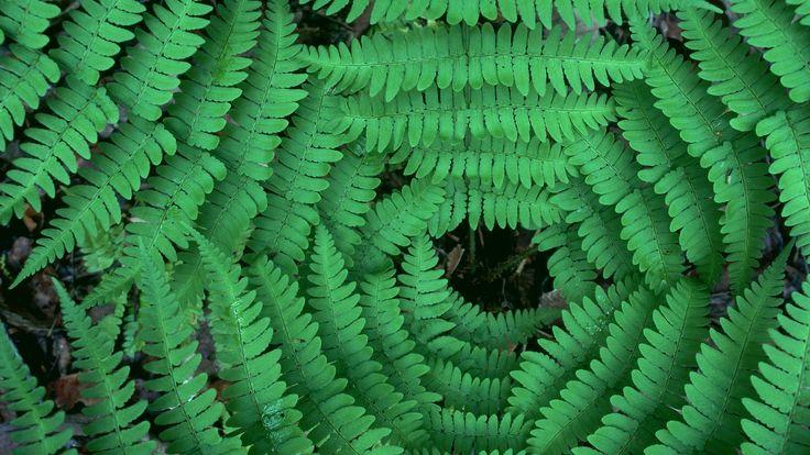 Backgrounds In High Quality - fern image, Littleton Jones 2017-03-10