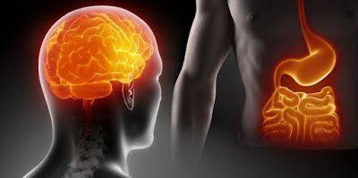 ΥΓΕΙΑΣ ΔΡΟΜΟΙ: Έντερο: Ο δεύτερος εγκέφαλος του σώματος