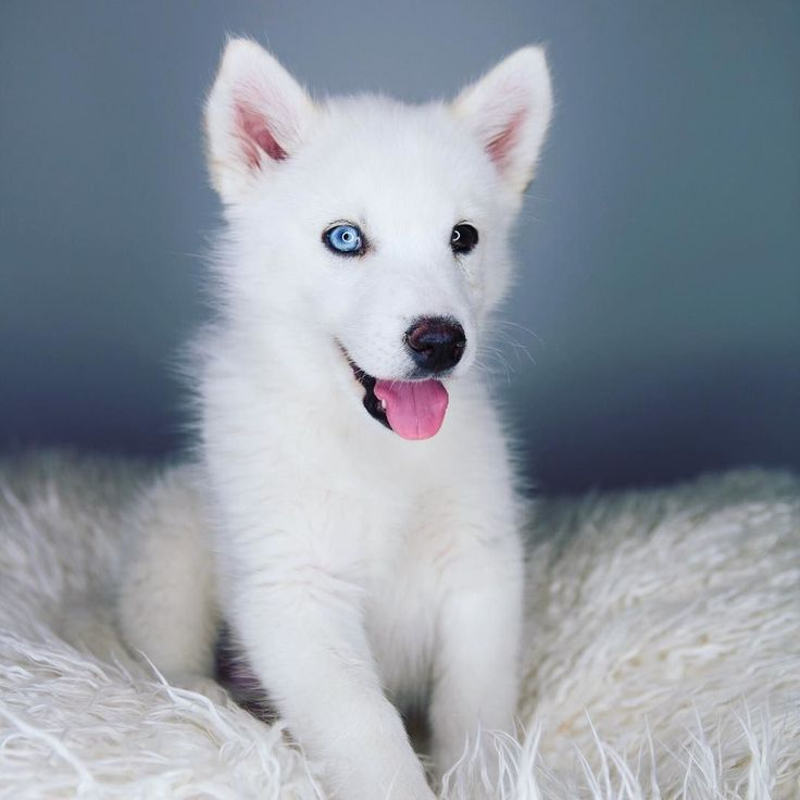 meet josefina joey graceffa and wolf