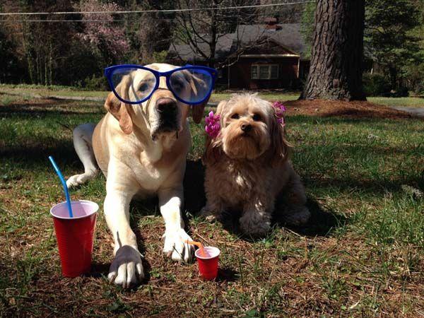 10 Photos of Really Cute Dog Couples
